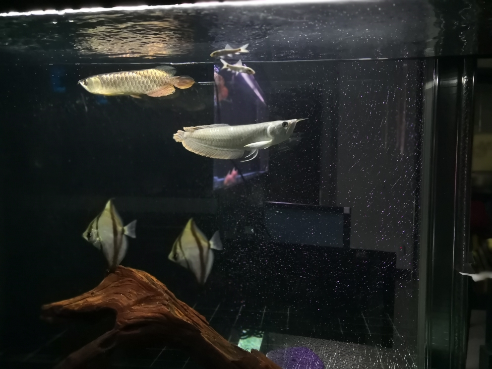 自己喜欢就好龙鱼 西安观赏鱼信息 西安博特第2张
