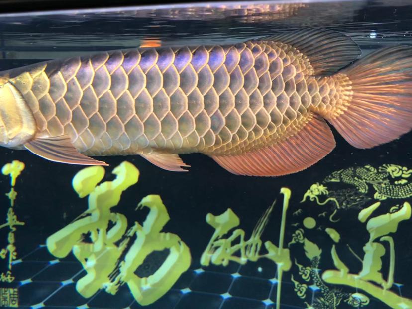 懵懵懂懂到家8个月福州亮点鱼缸保洁了拍照技术有限