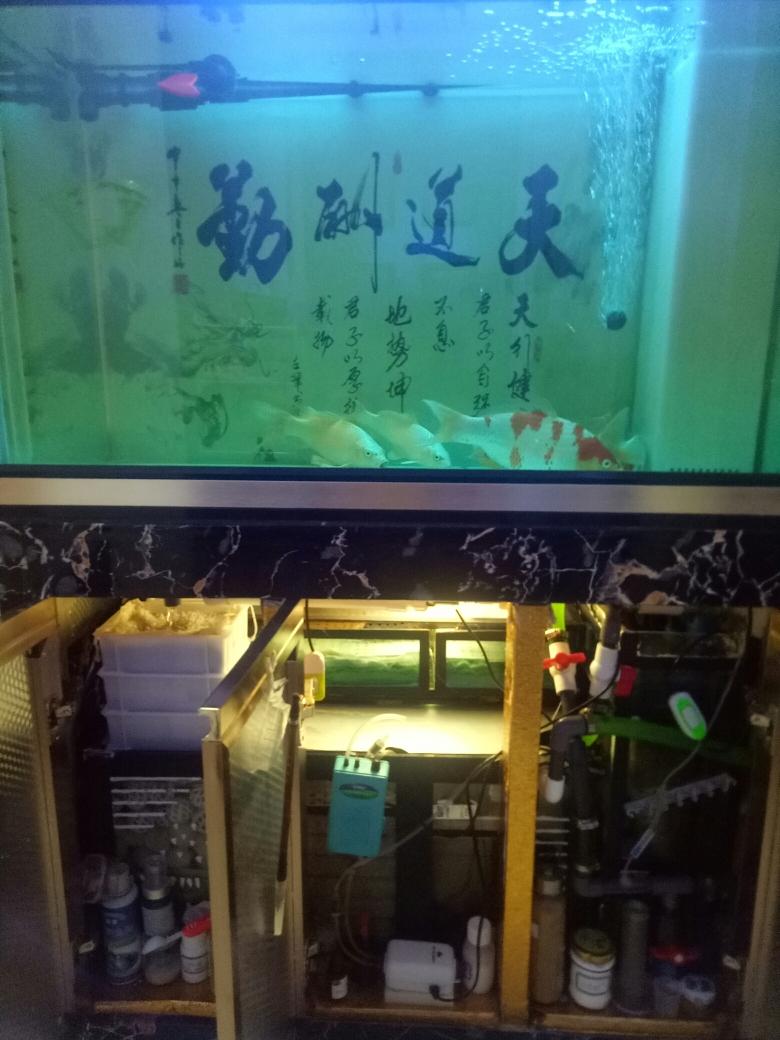 你的爱鱼神阳来宠 长沙观赏鱼 长沙龙鱼第1张