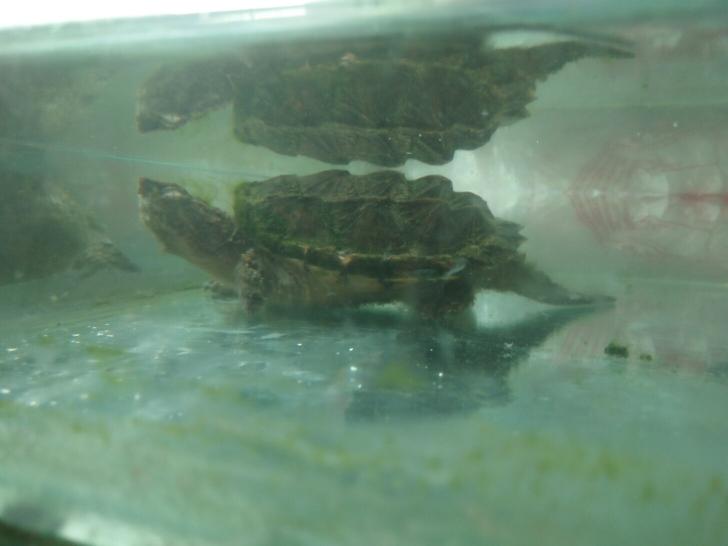 野外水沟边捉的 西安观赏鱼信息 西安博特第1张