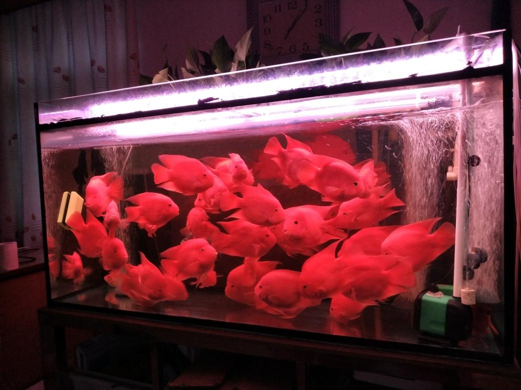 不一样鹦鹉鱼 贵阳龙鱼论坛 贵阳龙鱼第3张