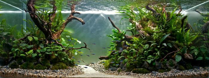 南美原生态缸这些神兽可撩 重庆观赏鱼 重庆水族批发市场第28张