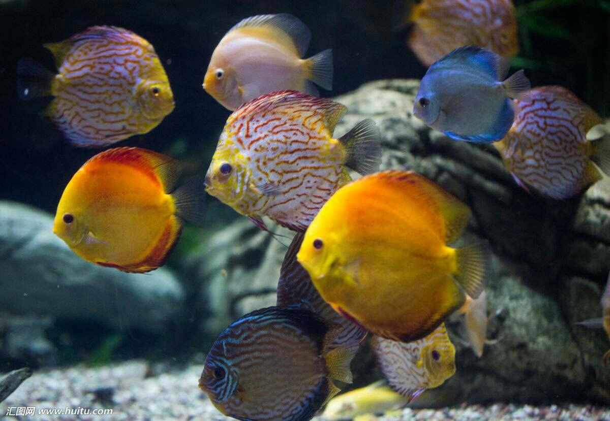 南美原生态缸这些神兽可撩 重庆观赏鱼 重庆水族批发市场第21张
