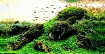 南美原生态缸这些神兽可撩 重庆观赏鱼 重庆水族批发市场第31张