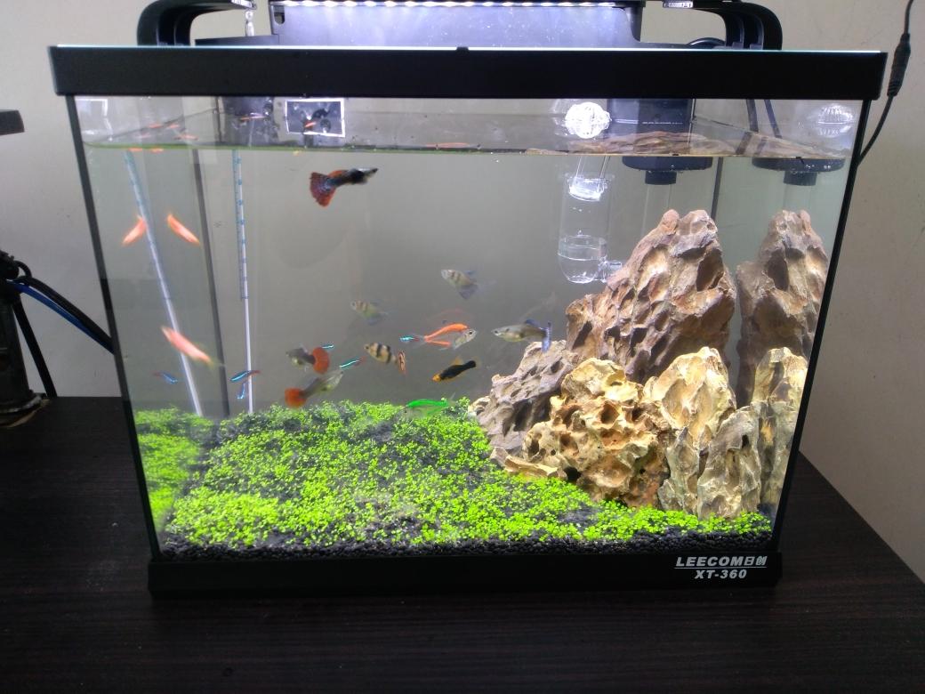 榆林鱼缸新做的小缸孔雀鱼 榆林龙鱼论坛