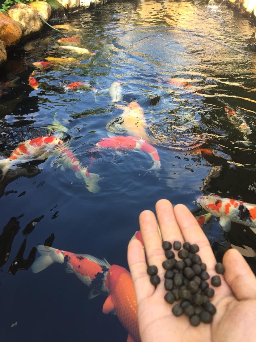您的鱼儿神阳来宠 天津观赏鱼 天津龙鱼第3张