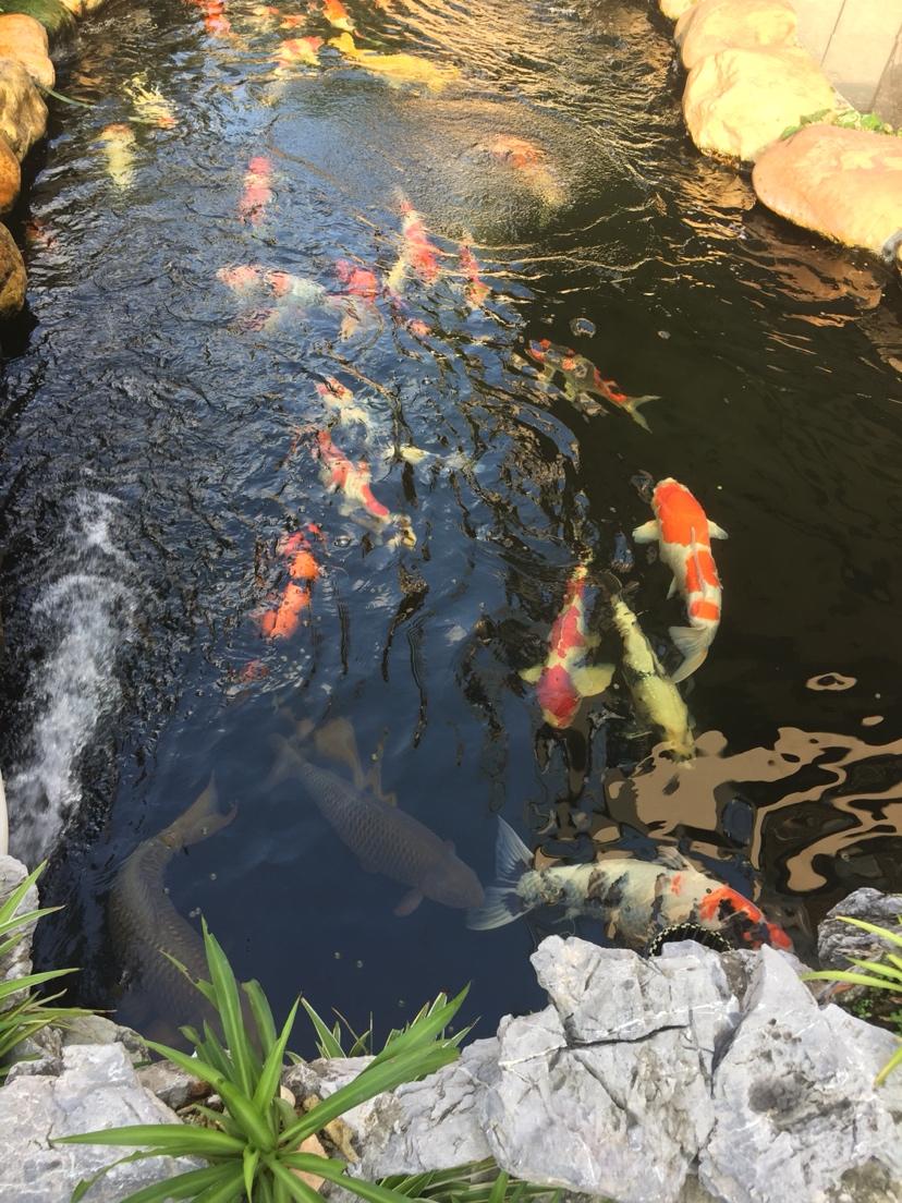 您的鱼儿神阳来宠 天津观赏鱼 天津龙鱼第4张
