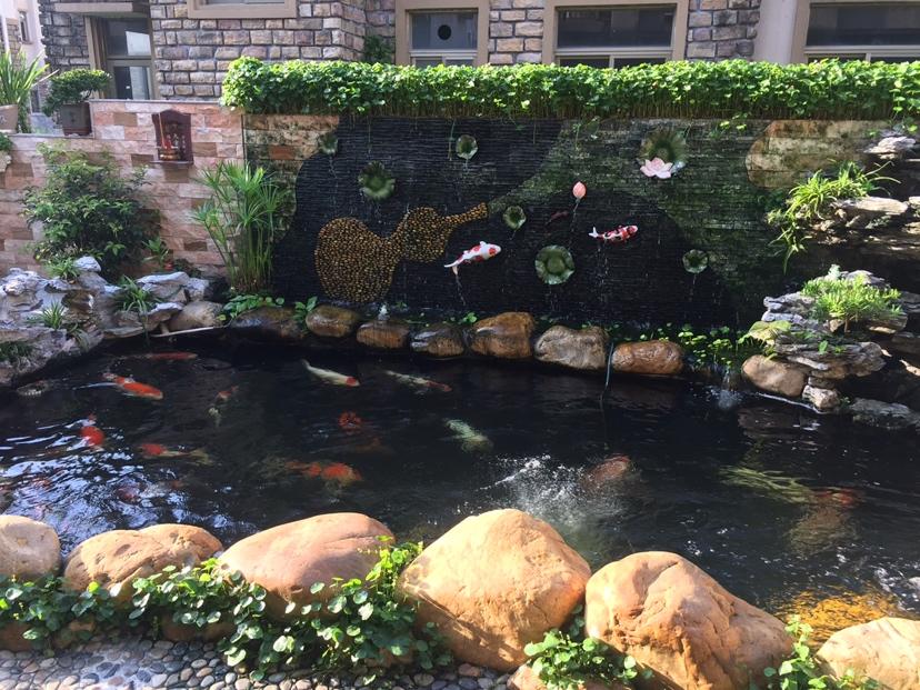 您的鱼儿神阳来宠 天津观赏鱼 天津龙鱼第5张