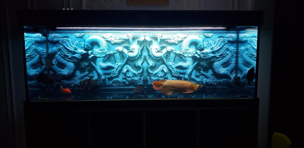 没状态龙鱼 太原观赏鱼 太原龙鱼第2张