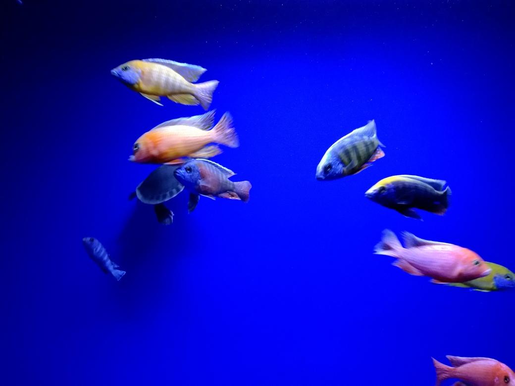新灯照上漂亮多了下一步造点珊瑚石 南宁龙鱼论坛 南宁龙鱼第1张