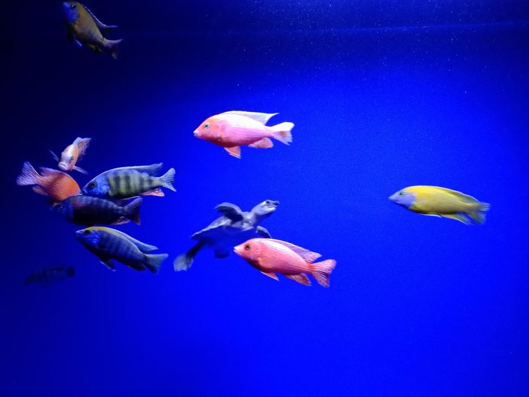 新灯照上漂亮多了下一步造点珊瑚石 南宁龙鱼论坛 南宁龙鱼第3张