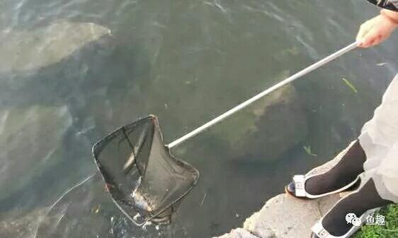 龙鱼零食只有想不到没有不能喂的 福州观赏鱼 福州龙鱼第2张