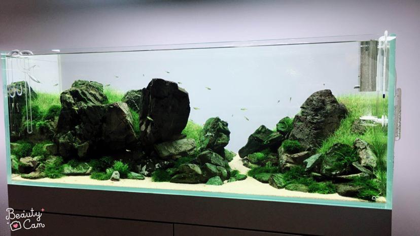 本色水景;沈阳热带鱼水草造景还原自然之美 沈阳龙鱼论坛 沈阳龙鱼第9张