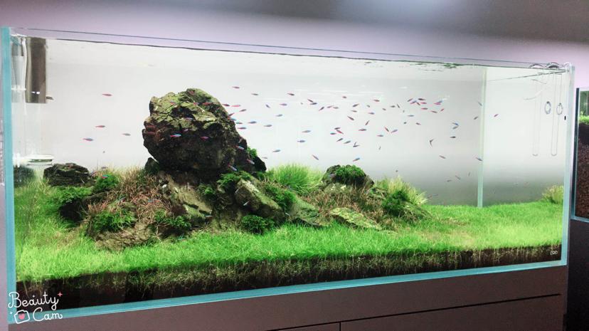 本色水景;沈阳热带鱼水草造景还原自然之美 沈阳龙鱼论坛 沈阳龙鱼第8张
