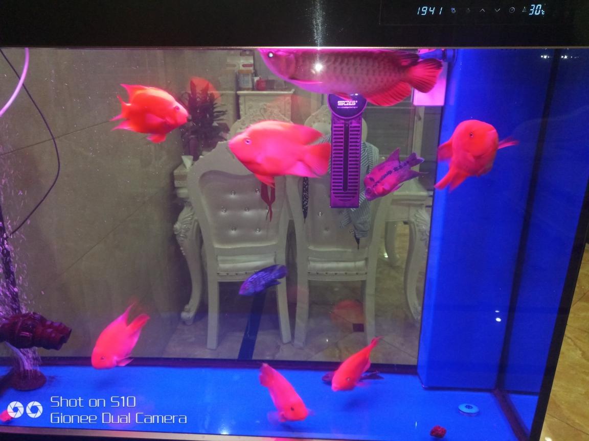 签个到长沙哪个水族馆好吧河南鱼友圈 长沙龙鱼论坛 长沙龙鱼第2张