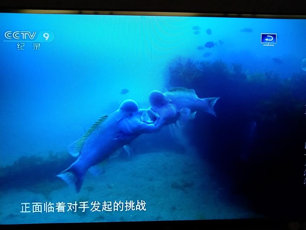 南京白化巴西龟价格两个鱼之间的斗争蓝色星球 南京水族批发市场 南京龙鱼第2张
