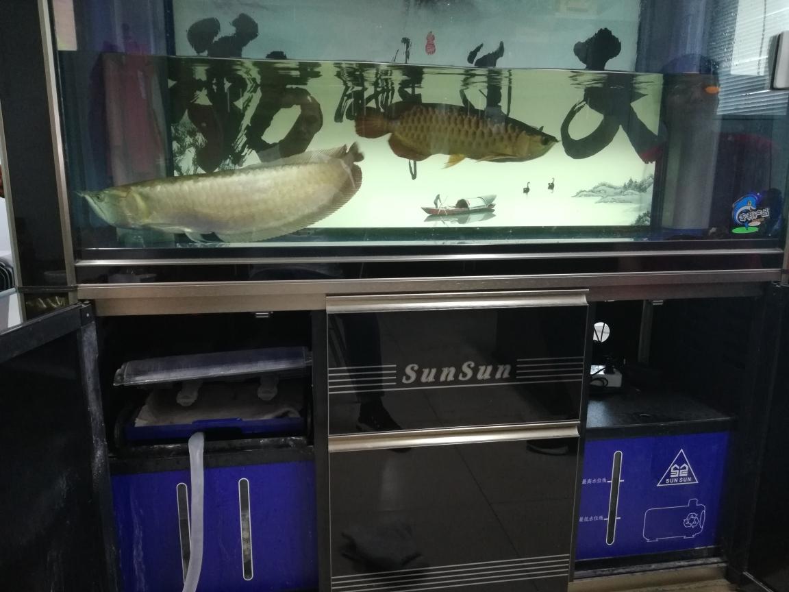 液氮鹦鹉鱼 长沙龙鱼论坛 长沙龙鱼第2张