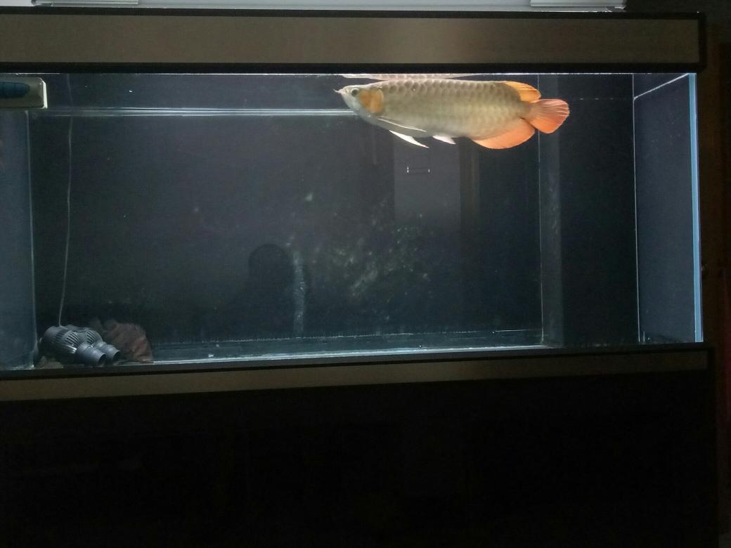 我在鱼邻申请仟鱼节能变频加热棒1000瓦 成都龙鱼论坛 成都龙鱼第2张
