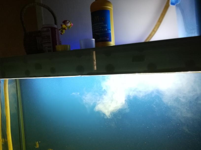 硝化细菌必备鹦鹉鱼 银川水族批发市场 银川龙鱼第1张