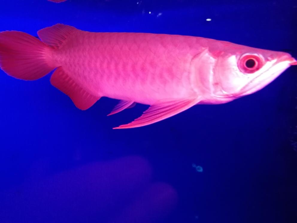宁波福满钻鱼批发市场新目标龙鱼 宁波观赏鱼