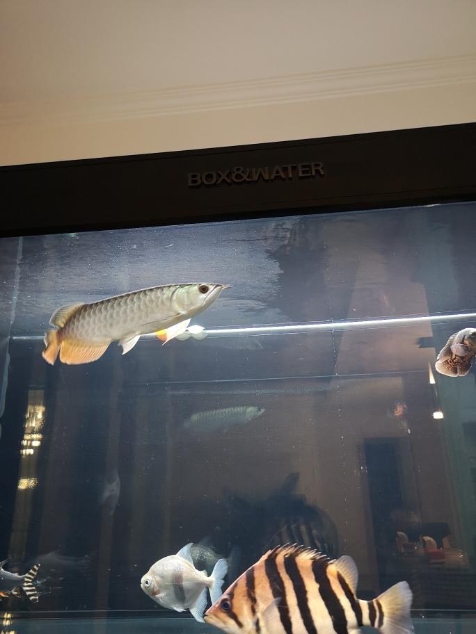 鱼友们水面一层油膜怎么处理 武汉水族批发市场