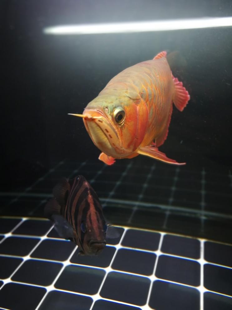 素颜不加任何特效来几张 吉林龙鱼论坛 吉林龙鱼第1张