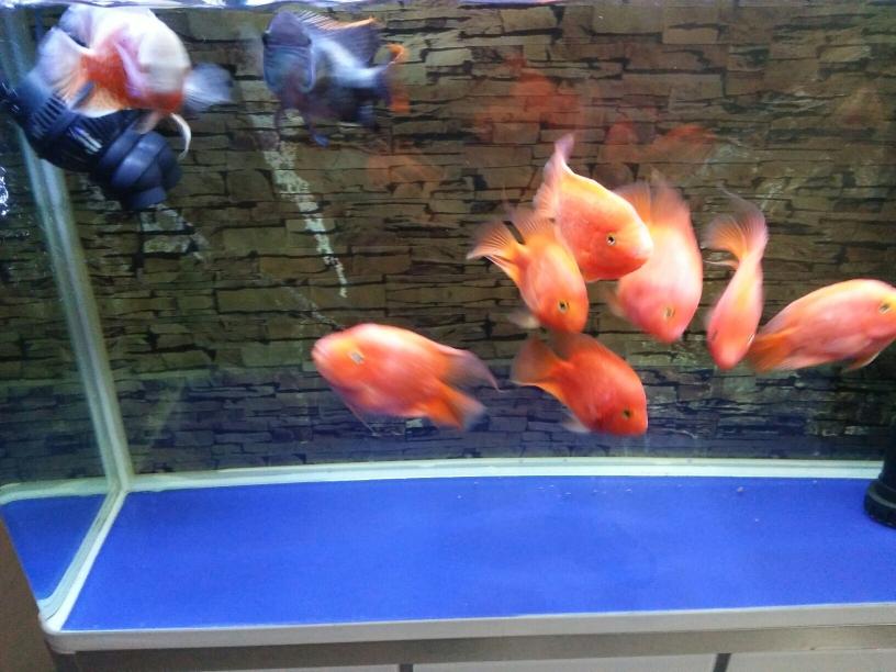 鱼种混养 石家庄水族批发市场