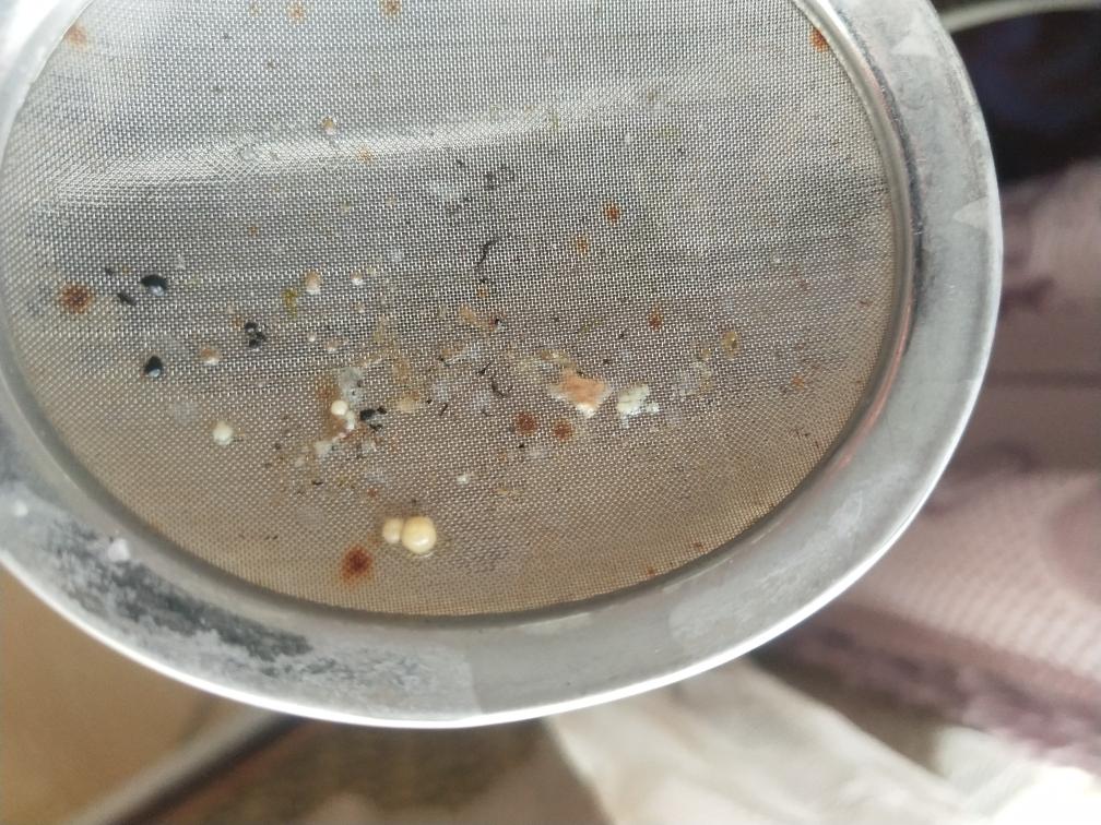 这是寄生虫吗? 合肥观赏鱼 合肥龙鱼第2张