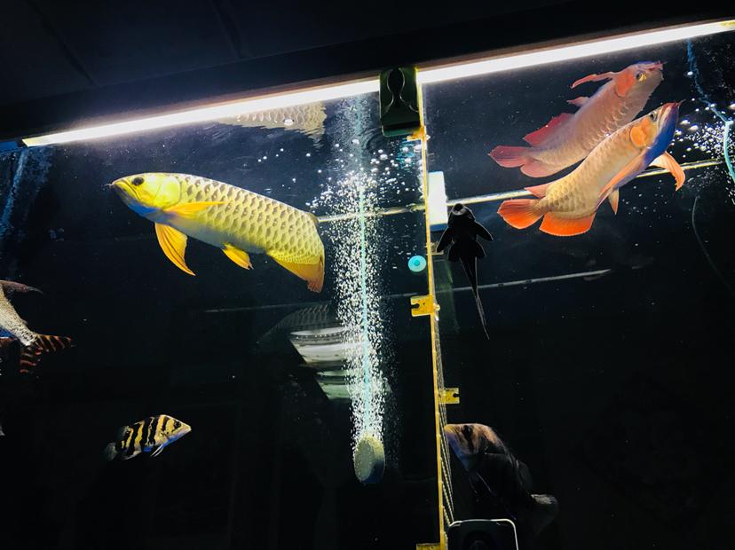 发色怎么样山东鱼友圈 合肥龙鱼论坛 合肥龙鱼第6张