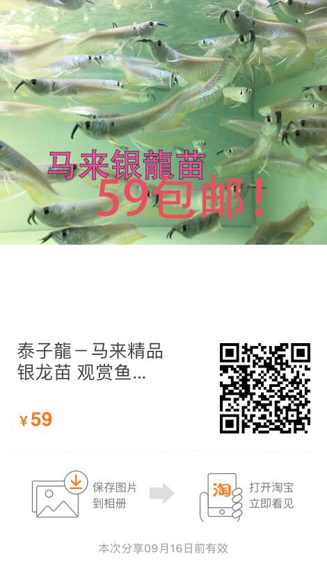 马来银龍苗商情 昆明龙鱼论坛 昆明龙鱼第6张