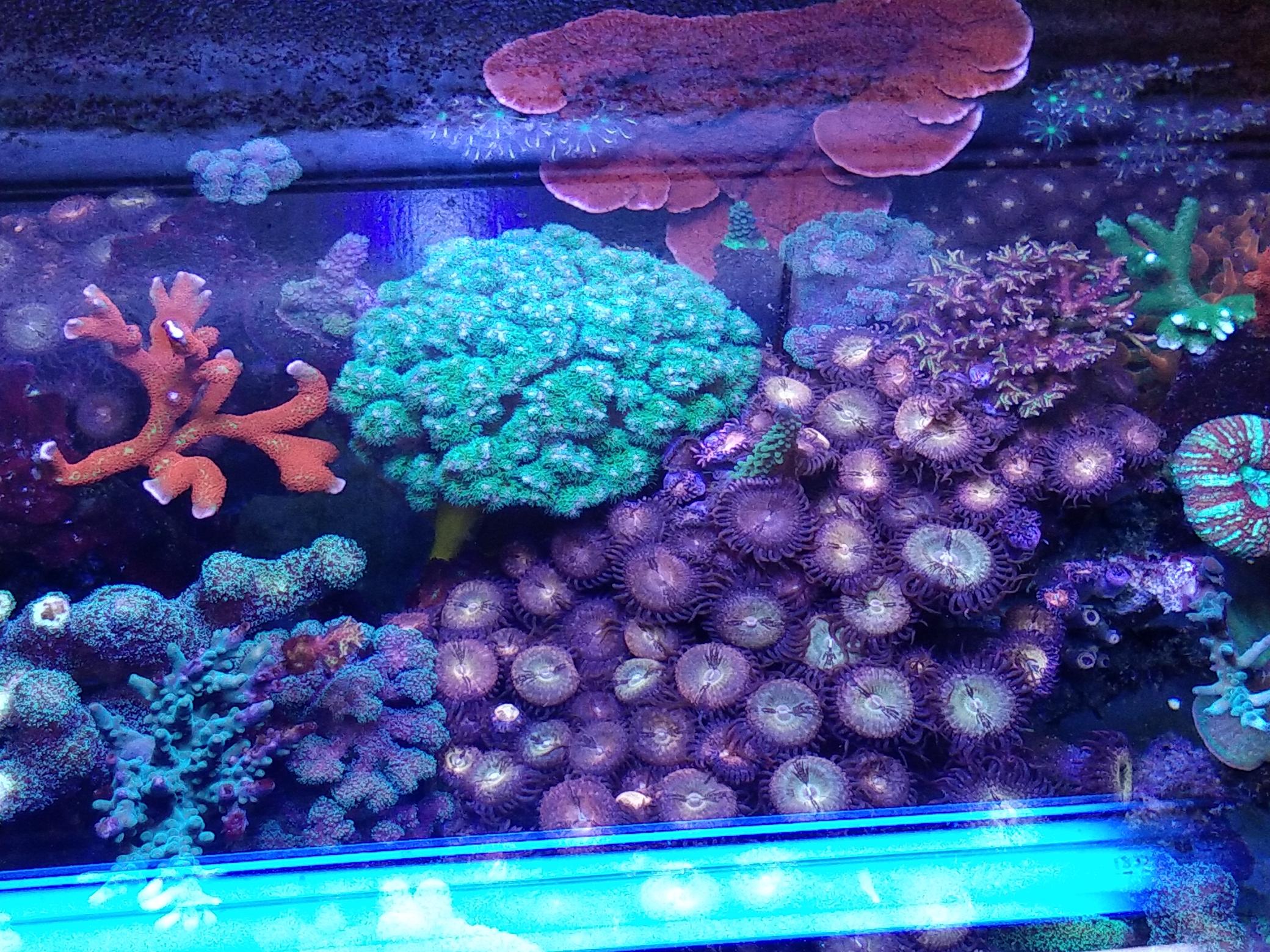 每周例行海水鱼 西安龙鱼论坛 西安博特第8张