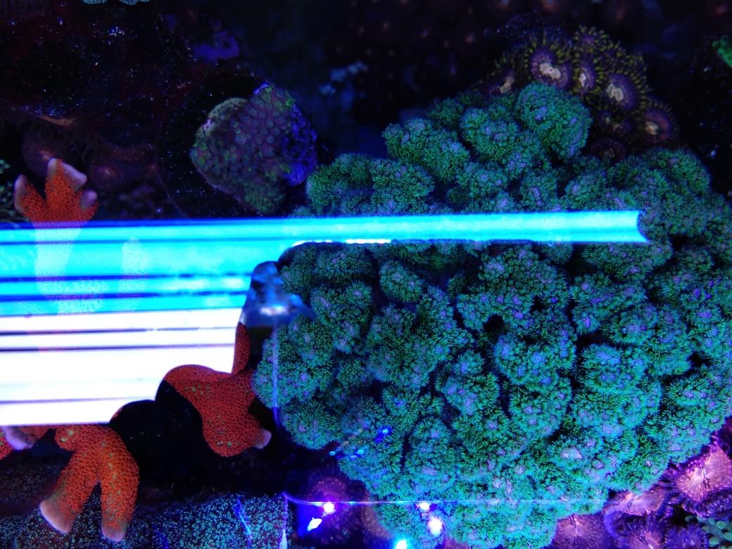 每周例行海水鱼 西安龙鱼论坛 西安博特第36张