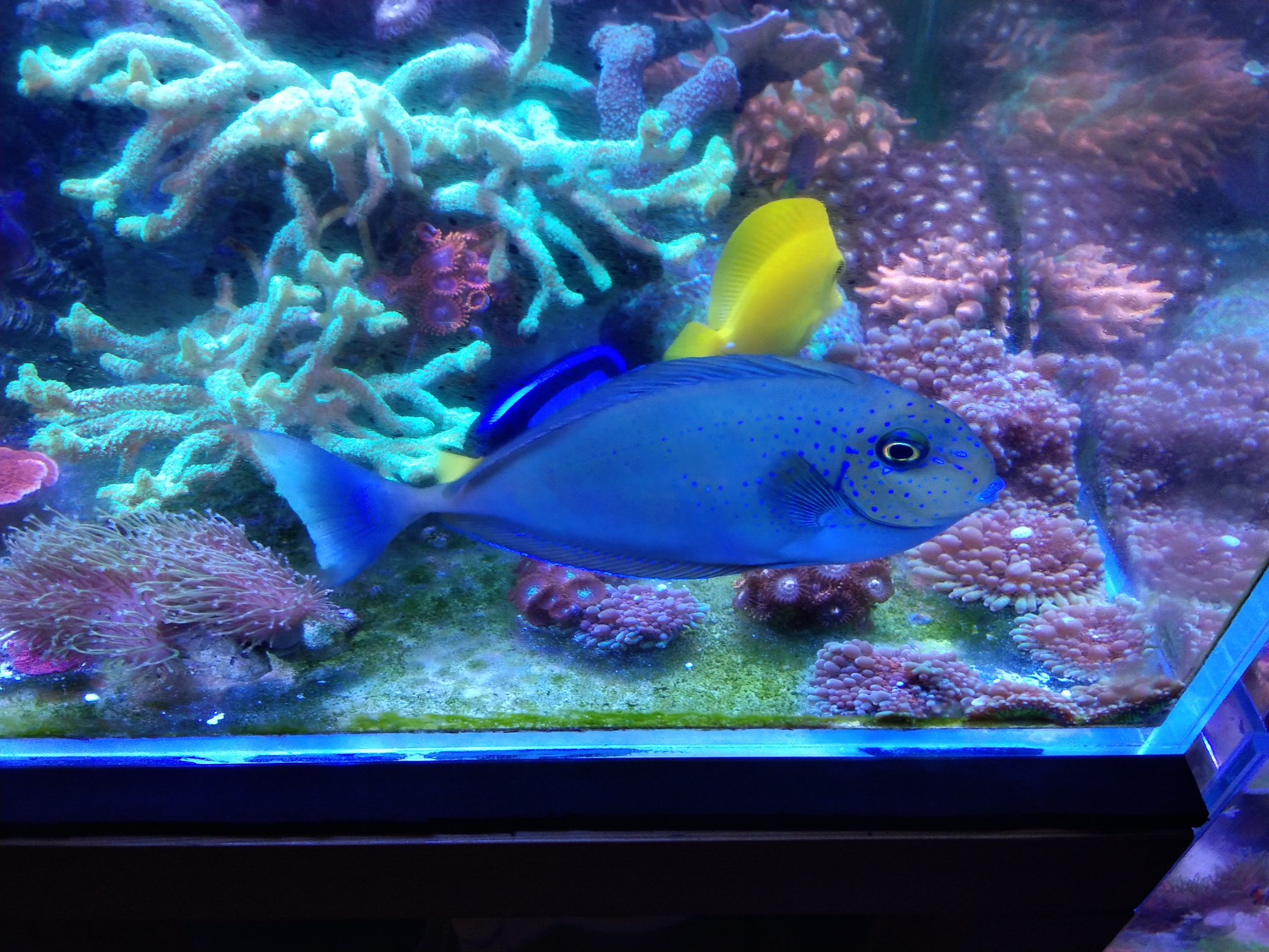 每周例行海水鱼 西安龙鱼论坛 西安博特第9张