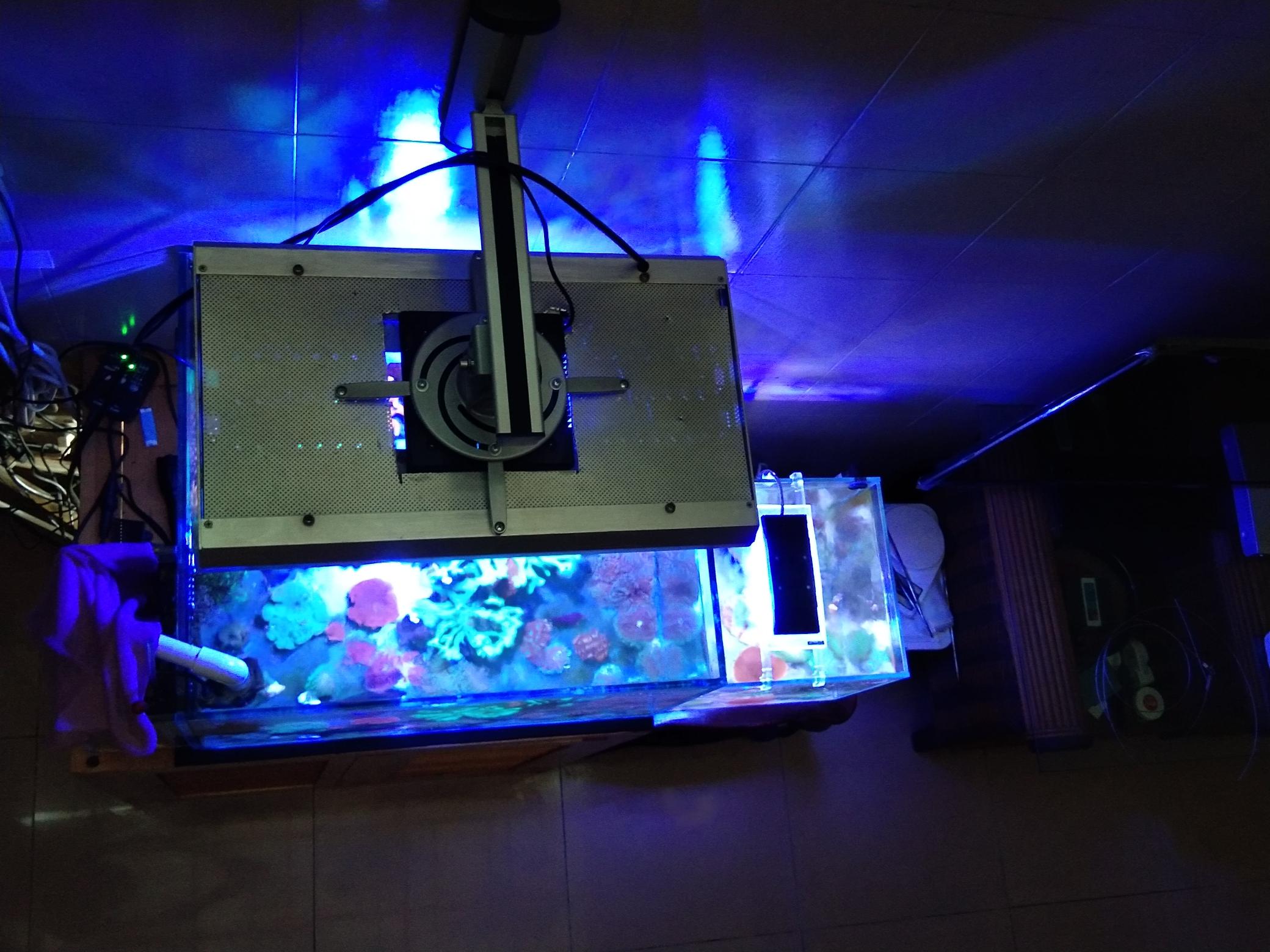每周例行海水鱼 西安龙鱼论坛 西安博特第1张