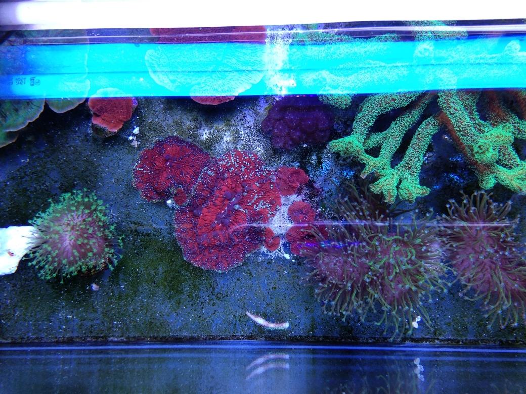 每周例行海水鱼 西安龙鱼论坛 西安博特第37张