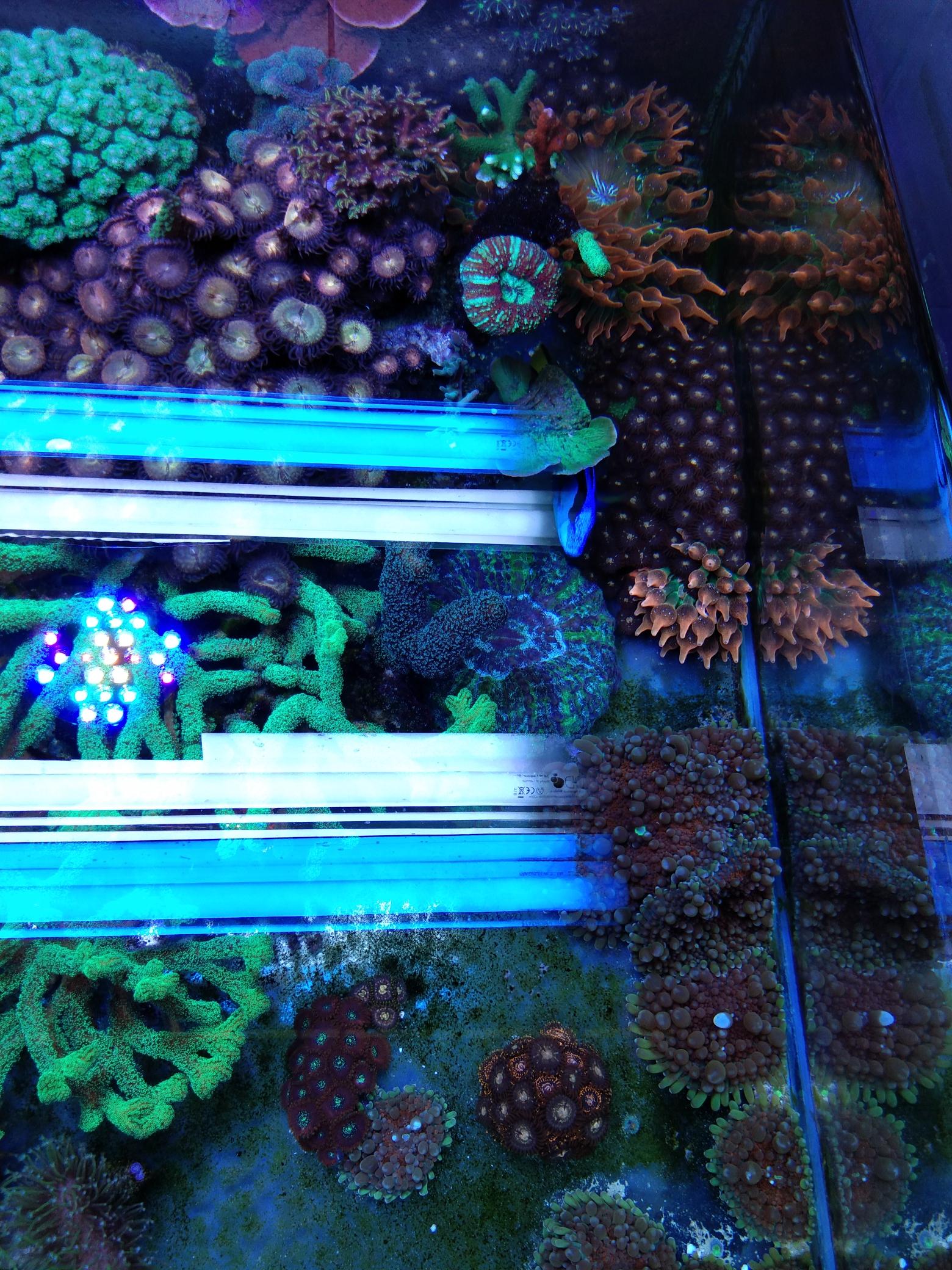 每周例行海水鱼 西安龙鱼论坛 西安博特第7张