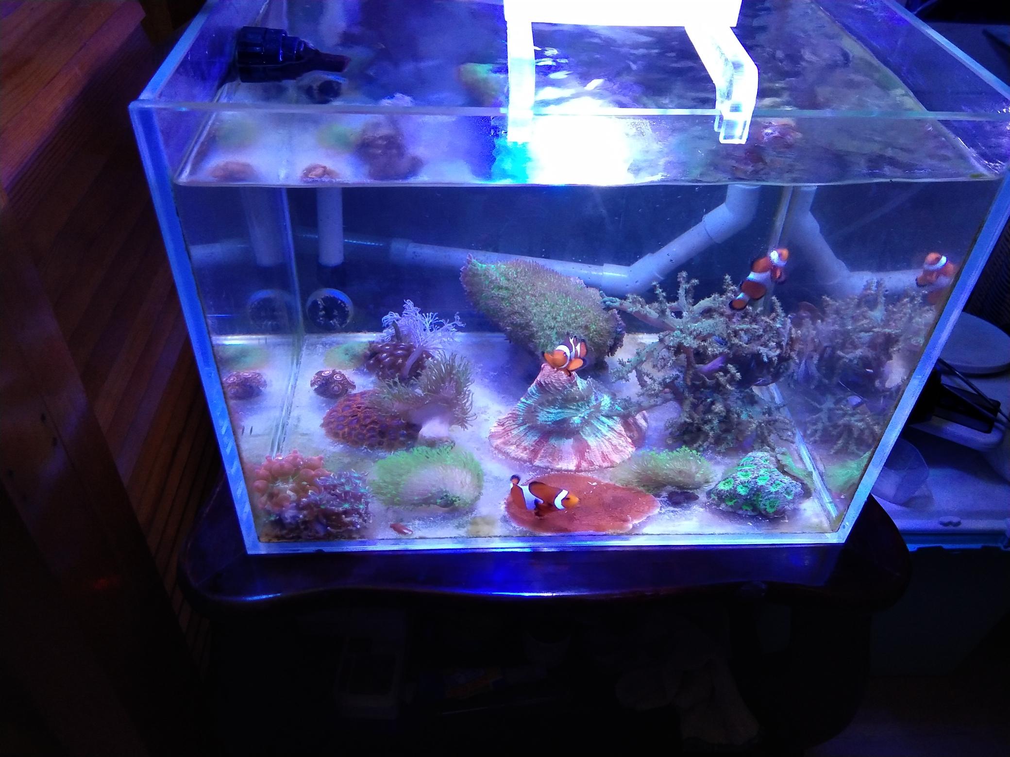 每周例行海水鱼 西安龙鱼论坛 西安博特第6张