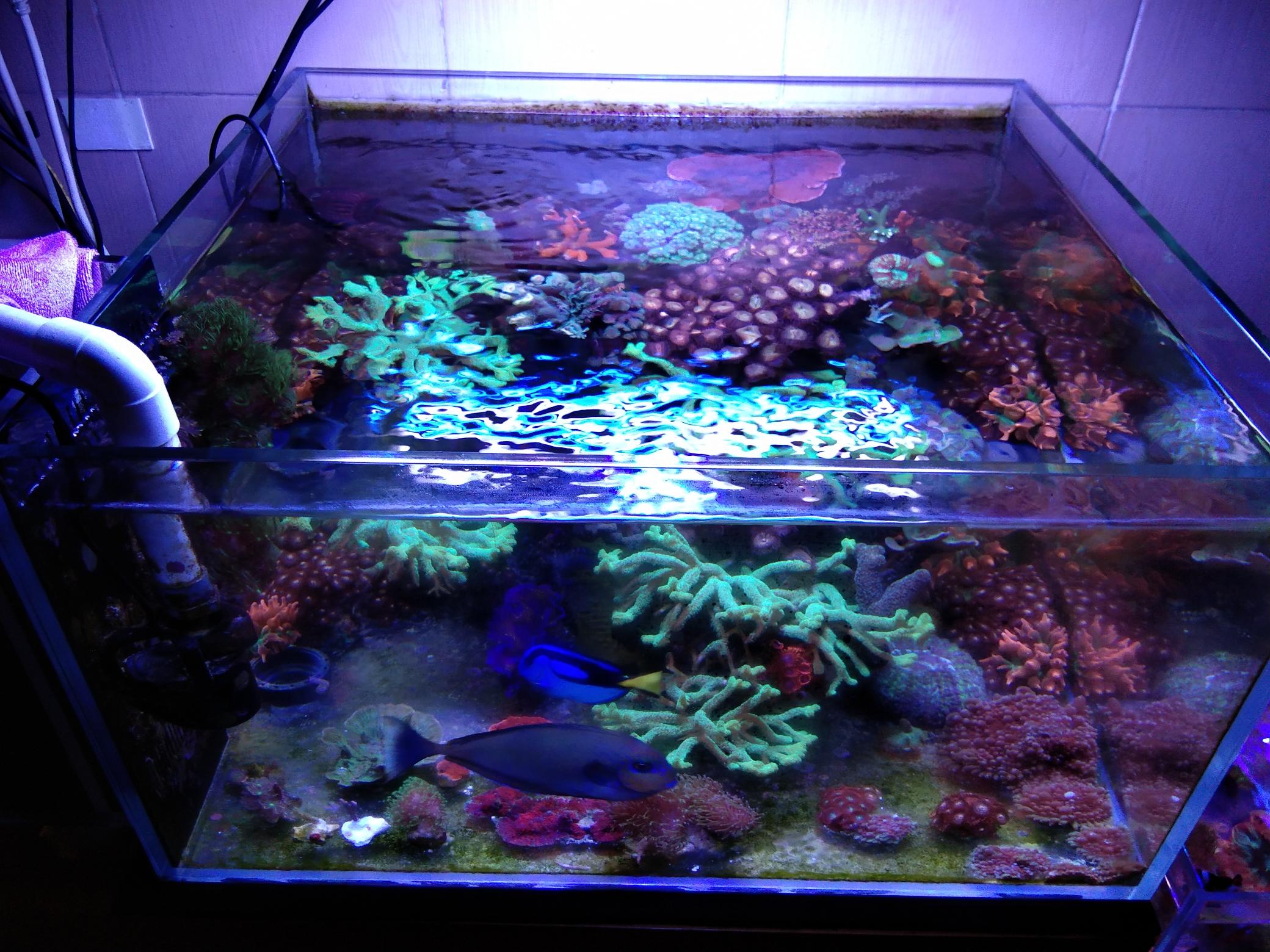 每周例行海水鱼 西安龙鱼论坛 西安博特第3张