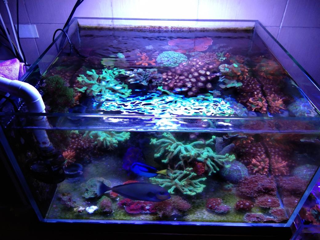 每周例行海水鱼 西安龙鱼论坛 西安博特第22张