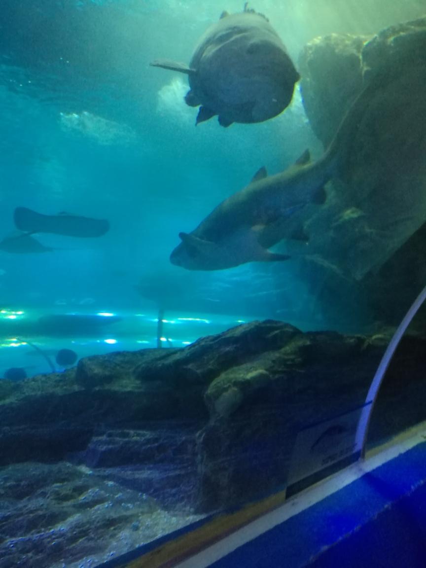 石家庄花鸟鱼虫天然趣下一句我什么时候能有这么大的鱼缸就好了 石家庄龙鱼论坛 石家庄龙鱼第3张