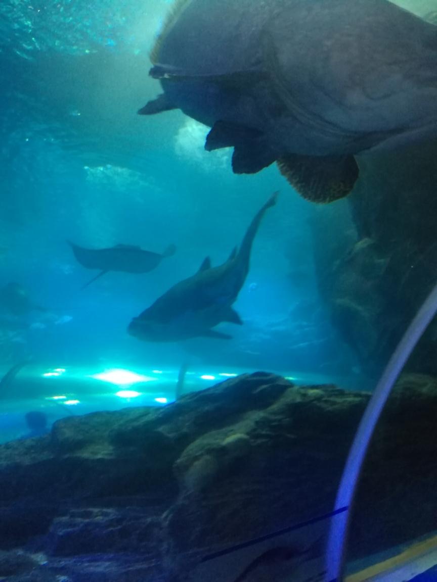 石家庄花鸟鱼虫天然趣下一句我什么时候能有这么大的鱼缸就好了 石家庄龙鱼论坛 石家庄龙鱼第1张