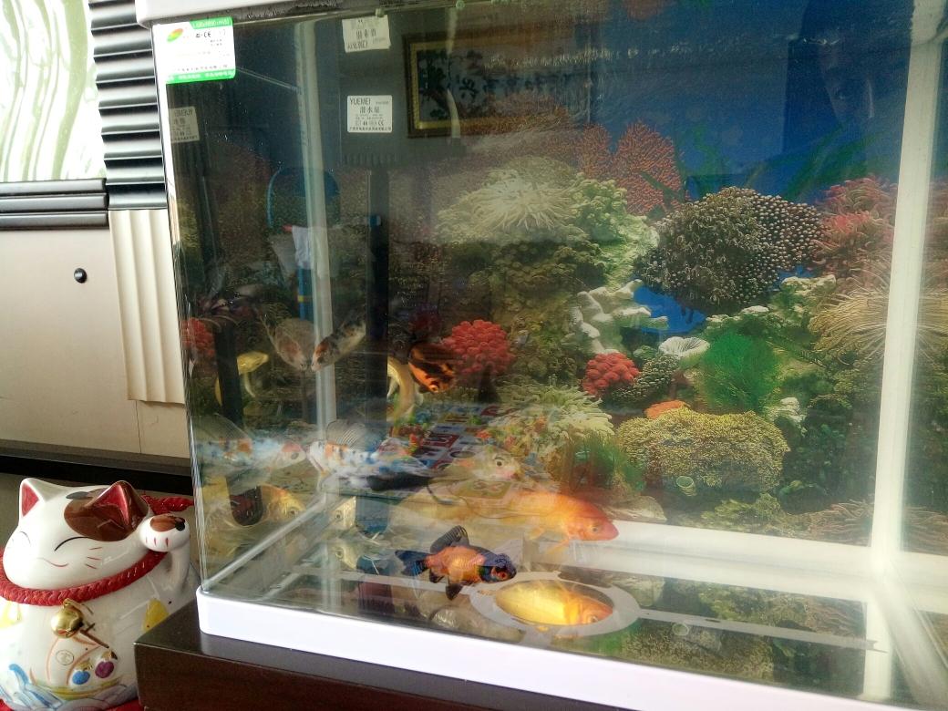 银川大帆女皇鱼人来熟的小金鱼会带动整个鱼缸的氛围 银川水族批发市场 银川龙鱼第4张