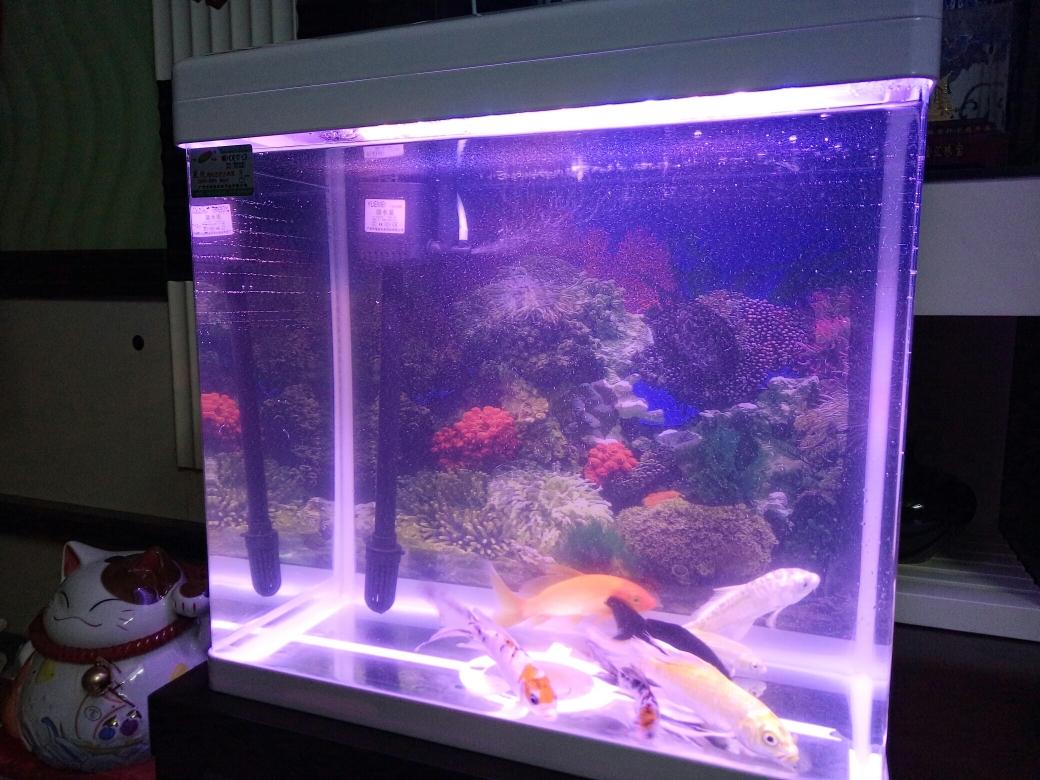 银川大帆女皇鱼人来熟的小金鱼会带动整个鱼缸的氛围 银川水族批发市场 银川龙鱼第6张