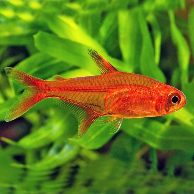 草缸鱼类的选择 重庆观赏鱼 重庆水族批发市场第9张