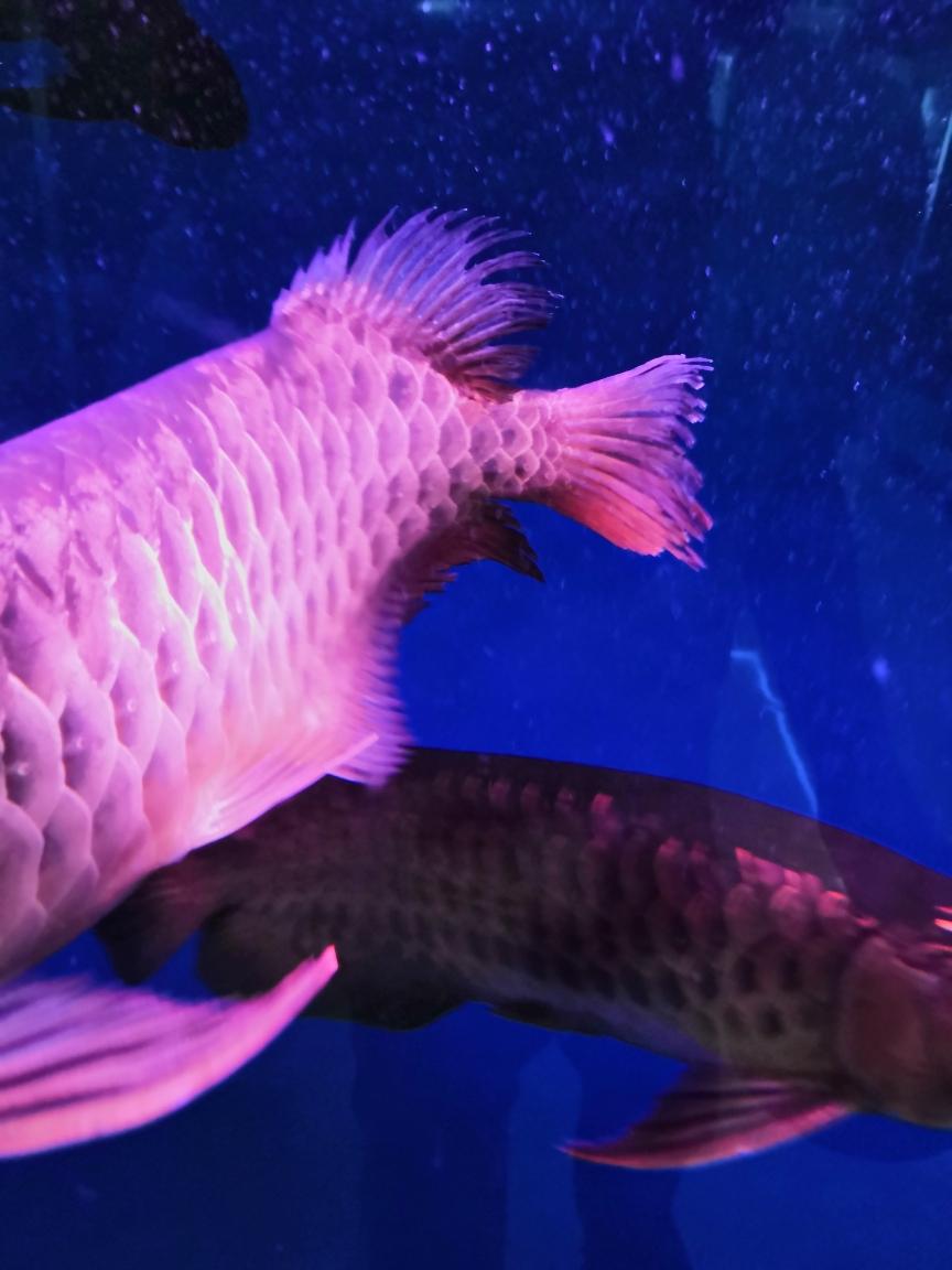 开餐了小可怜内蒙古鱼友圈 济南观赏鱼 济南龙鱼第4张