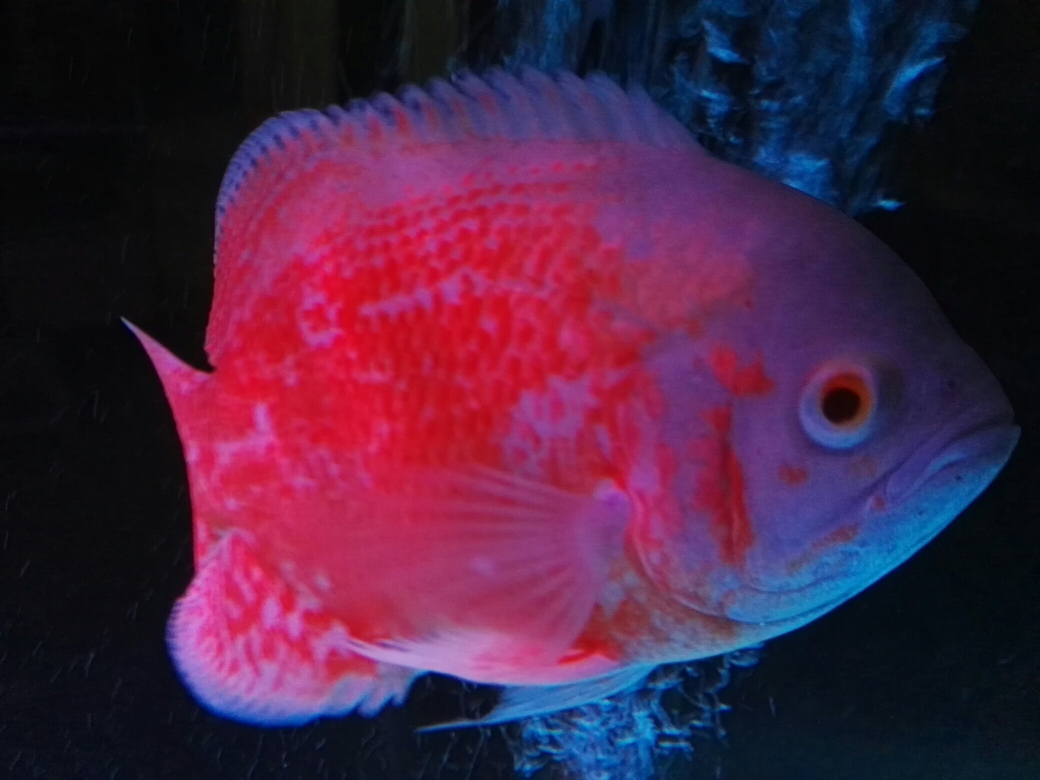 给你个眼神海南鱼友圈 合肥观赏鱼 合肥龙鱼第1张