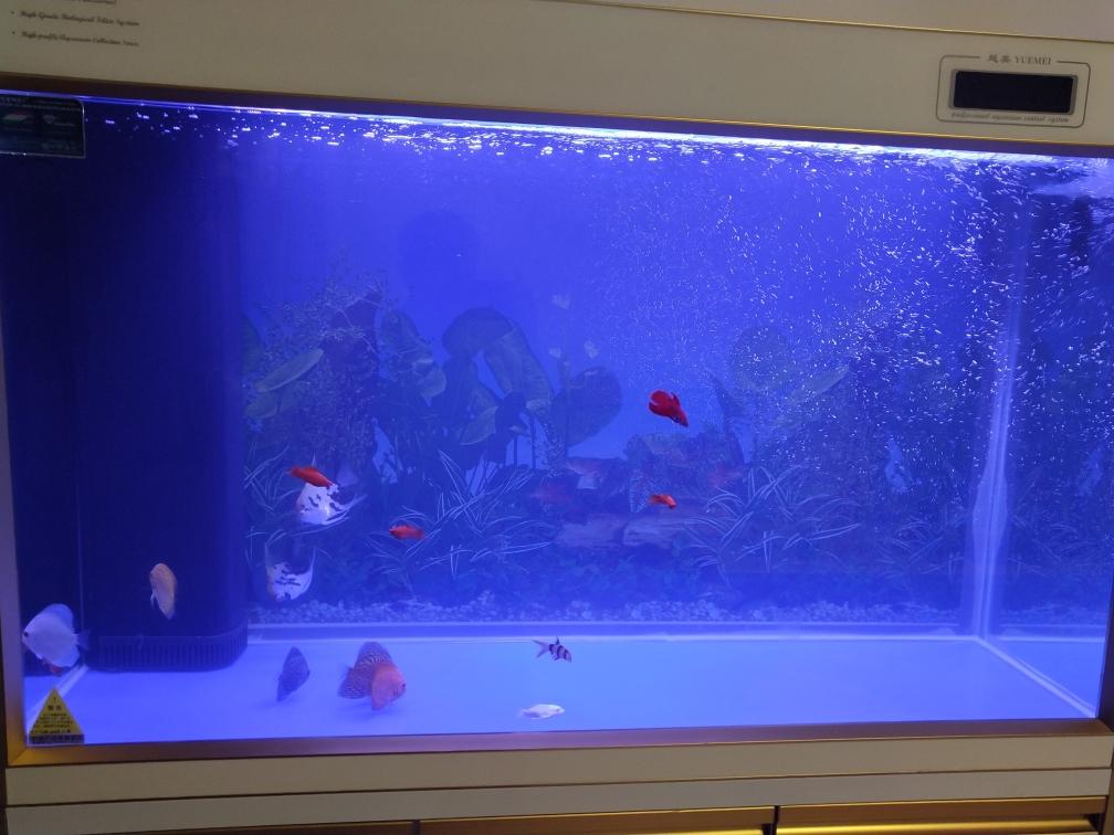 武汉通川区观赏鱼跪求好用的滤材 武汉水族批发市场 武汉龙鱼第1张