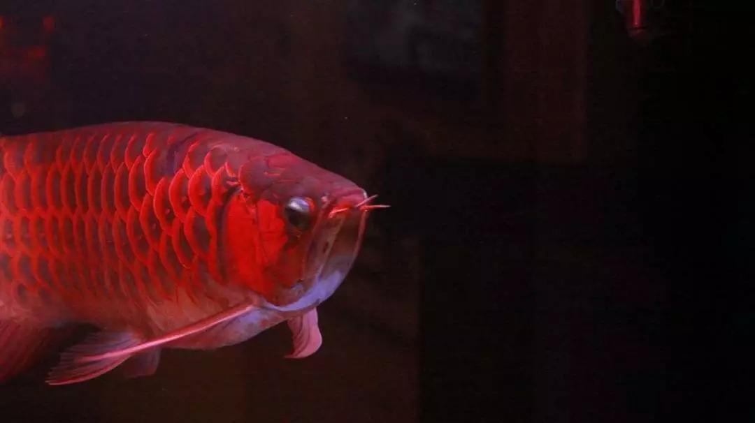 养水的最重要环节——换水系列二 绵阳龙鱼论坛 绵阳水族批发市场第3张