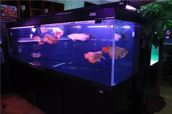 养水的最重要环节——换水系列二 绵阳龙鱼论坛 绵阳水族批发市场第2张