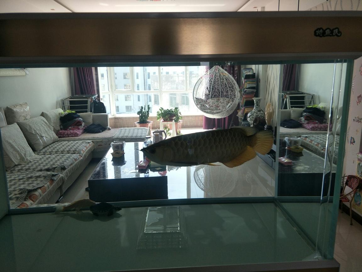 福州有没有会做龙鱼掉眼手术看看我的算空气鱼缸吗 福州龙鱼论坛 福州龙鱼第1张